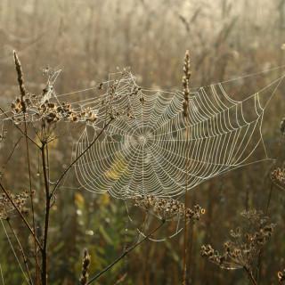 Spiderwebs among reeds