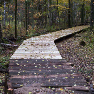 A wooden walking path in trees