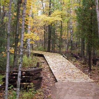 A wooden path through trees