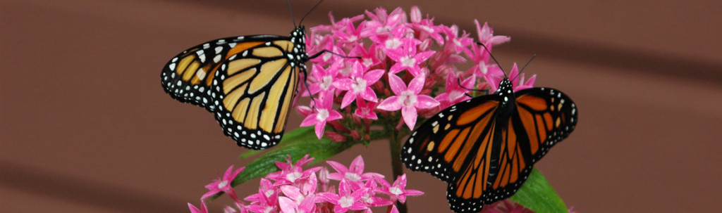 homepage-slider-monarchs-1024x303.jpg
