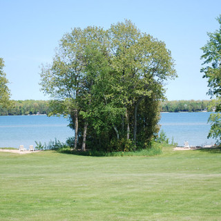 Trees and grass in front of the lake