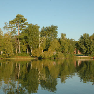 Trees on the lake