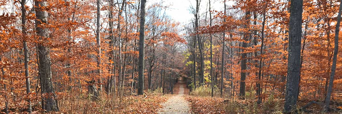 A path through fall trees